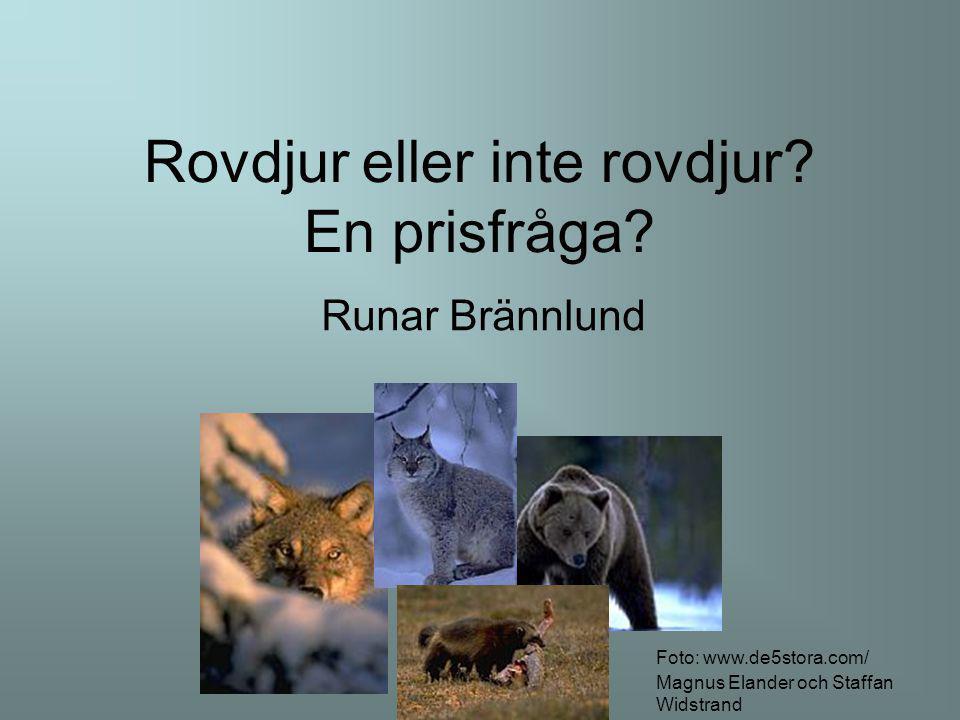 Rovdjur eller inte rovdjur? En prisfråga? Runar Brännlund Foto: www.de5stora.com/ Magnus Elander och Staffan Widstrand
