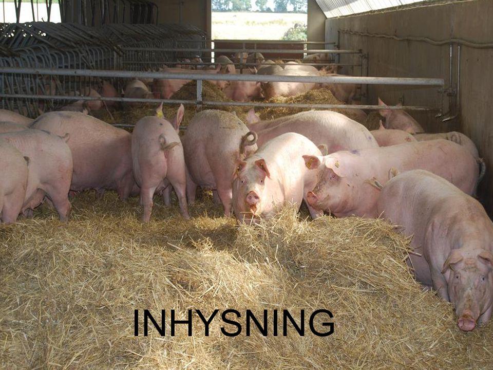 Föreläsningsrubrik / temaUppfödning av gyltor till hållbara suggor i bruksbesättningar INHYSNING