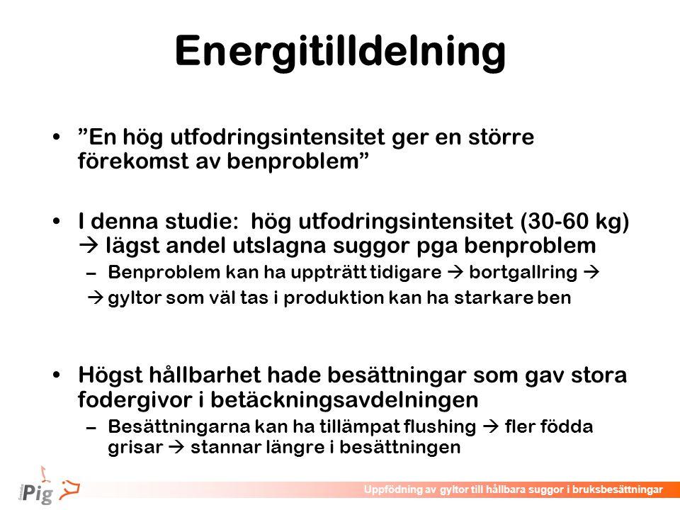 """Föreläsningsrubrik / temaUppfödning av gyltor till hållbara suggor i bruksbesättningar Energitilldelning •""""En hög utfodringsintensitet ger en större f"""