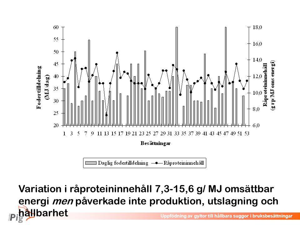 Föreläsningsrubrik / temaUppfödning av gyltor till hållbara suggor i bruksbesättningar Variation i råproteininnehåll 7,3-15,6 g/ MJ omsättbar energi m