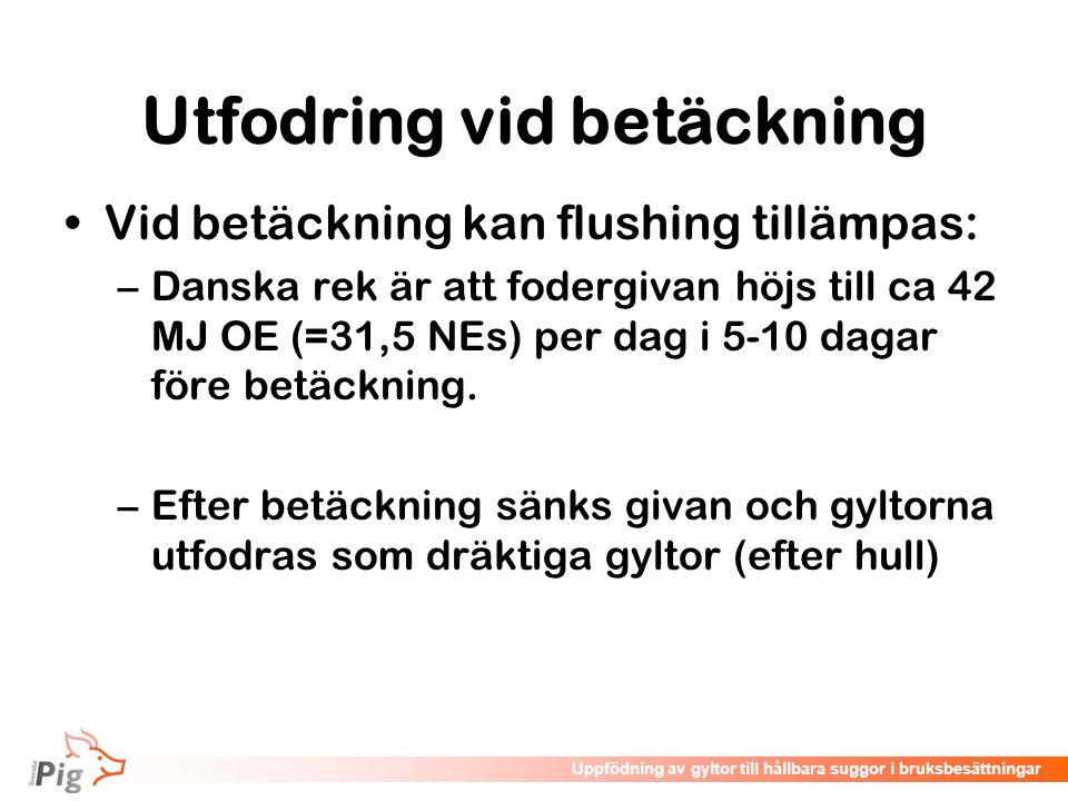 Föreläsningsrubrik / temaUppfödning av gyltor till hållbara suggor i bruksbesättningar Utfodring vid betäckning •Vid betäckning kan flushing tillämpas