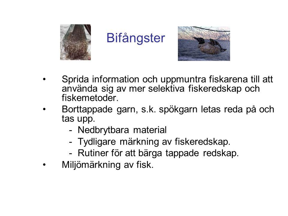 Bifångster •Sprida information och uppmuntra fiskarena till att använda sig av mer selektiva fiskeredskap och fiskemetoder. •Borttappade garn, s.k. sp