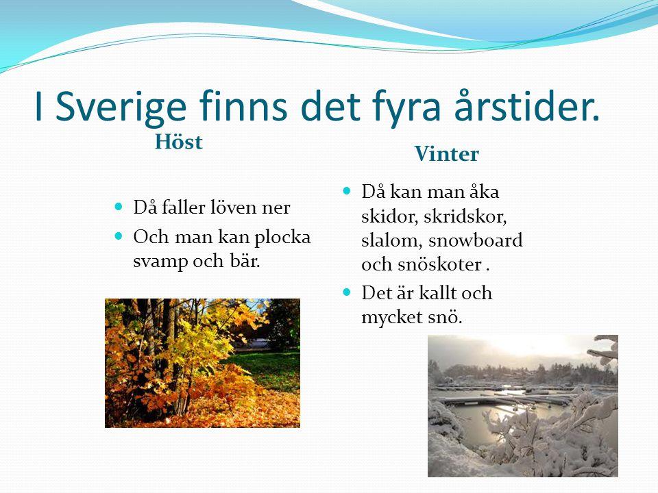 I Sverige finns det fyra årstider. Höst Vinter  Då faller löven ner  Och man kan plocka svamp och bär.  Då kan man åka skidor, skridskor, slalom, s