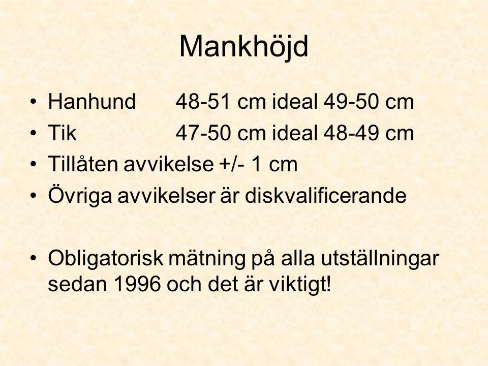 Mankhöjd •Hanhund 48-51 cm ideal 49-50 cm •Tik 47-50 cm ideal 48-49 cm •Tillåten avvikelse +/- 1 cm •Övriga avvikelser är diskvalificerande •Obligatorisk mätning på alla utställningar sedan 1996 och det är viktigt!