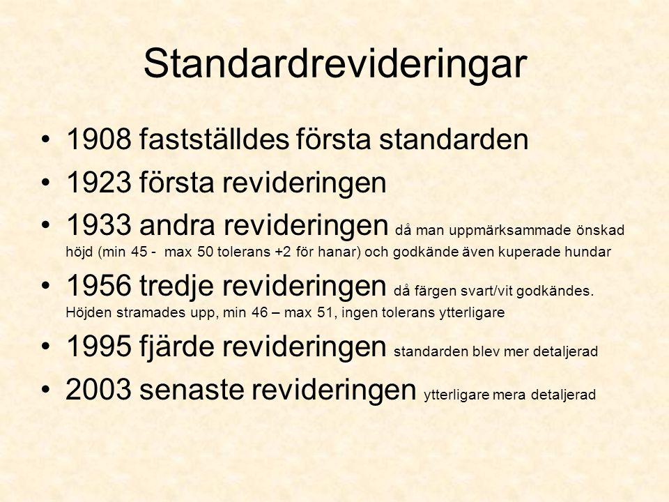 Standardrevideringar •1908 fastställdes första standarden •1923 första revideringen •1933 andra revideringen då man uppmärksammade önskad höjd (min 45 - max 50 tolerans +2 för hanar) och godkände även kuperade hundar •1956 tredje revideringen då färgen svart/vit godkändes.