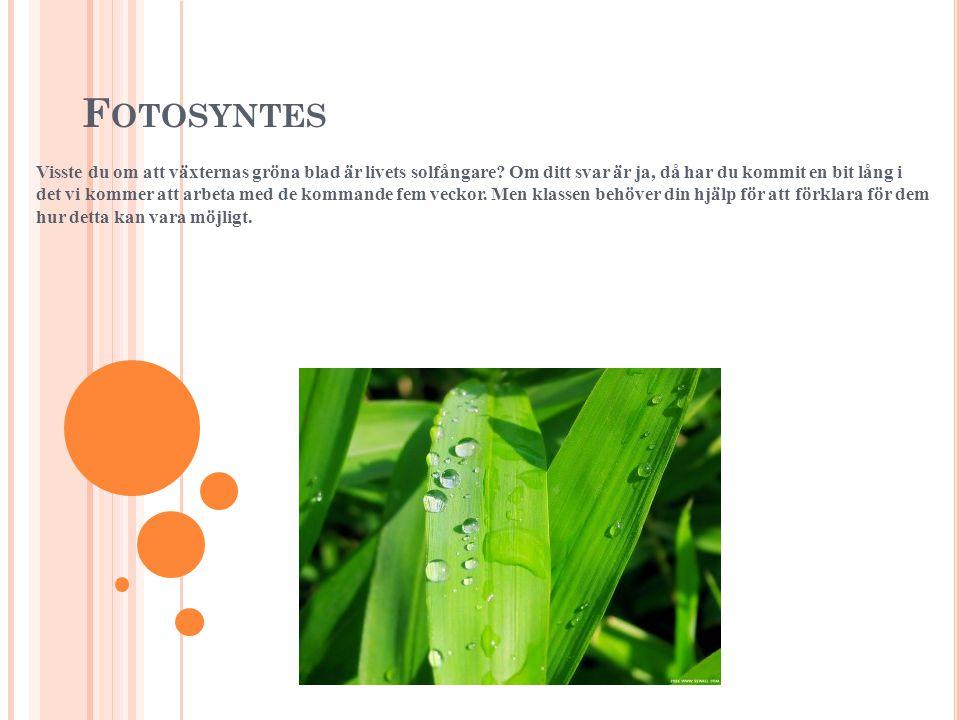 F OTOSYNTES Visste du om att växternas gröna blad är livets solfångare.