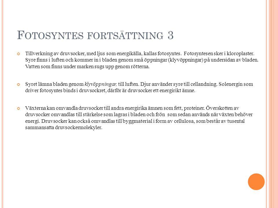 F OTOSYNTES FORTSÄTTNING 3 Tillverkning av druvsocker, med ljus som energikälla, kallas fotosyntes.