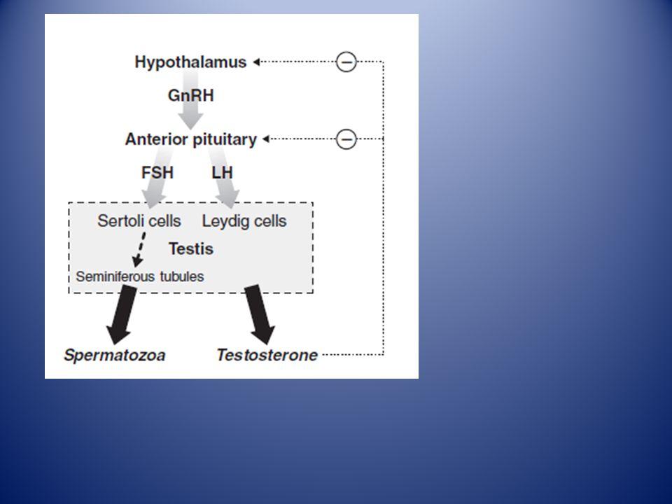 Arver 2009 SHBG= Sexual-hormon bindande globulin: