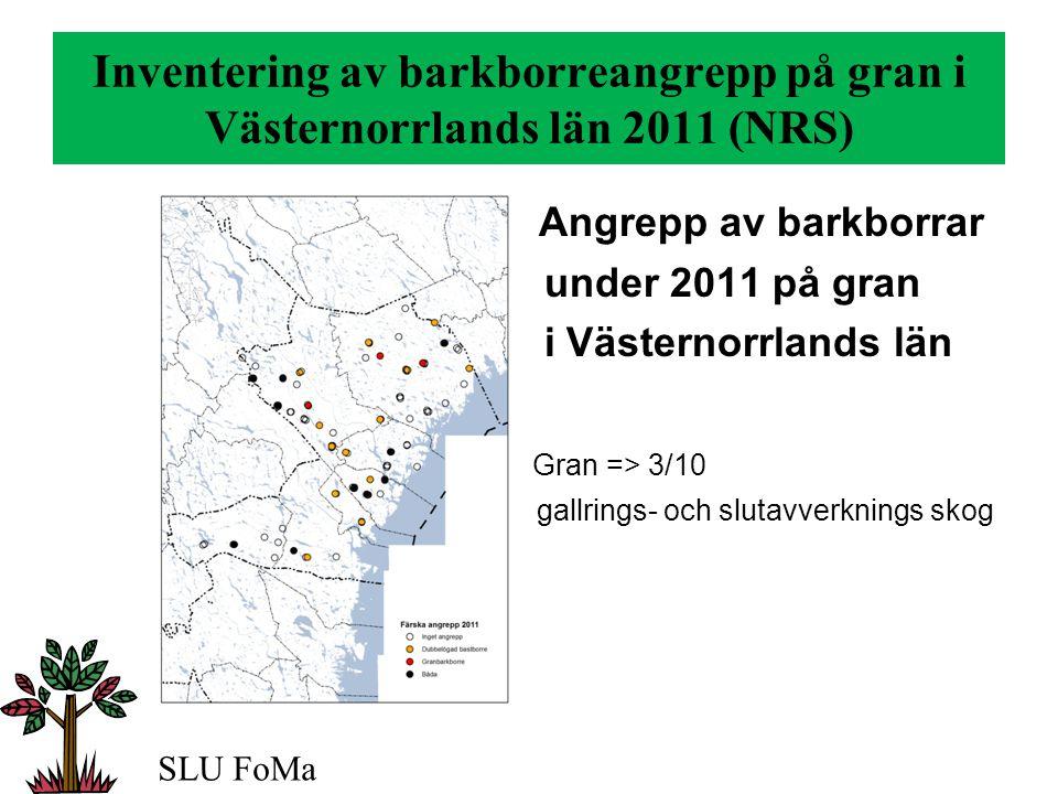 Inventering av barkborreangrepp på gran i Västernorrlands län 2011 (NRS) Angrepp av barkborrar under 2011 på gran i Västernorrlands län Gran => 3/10 gallrings- och slutavverknings skog SLU FoMa