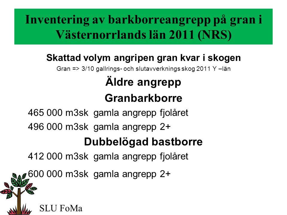 Inventering av barkborreangrepp på gran i Västernorrlands län 2011 (NRS) Skattad volym angripen gran kvar i skogen Gran => 3/10 gallrings- och slutavverknings skog 2011 Y –län Äldre angrepp Granbarkborre 465 000 m3sk gamla angrepp fjolåret 496 000 m3sk gamla angrepp 2+ Dubbelögad bastborre 412 000 m3sk gamla angrepp fjolåret 600 000 m3sk gamla angrepp 2+ SLU FoMa