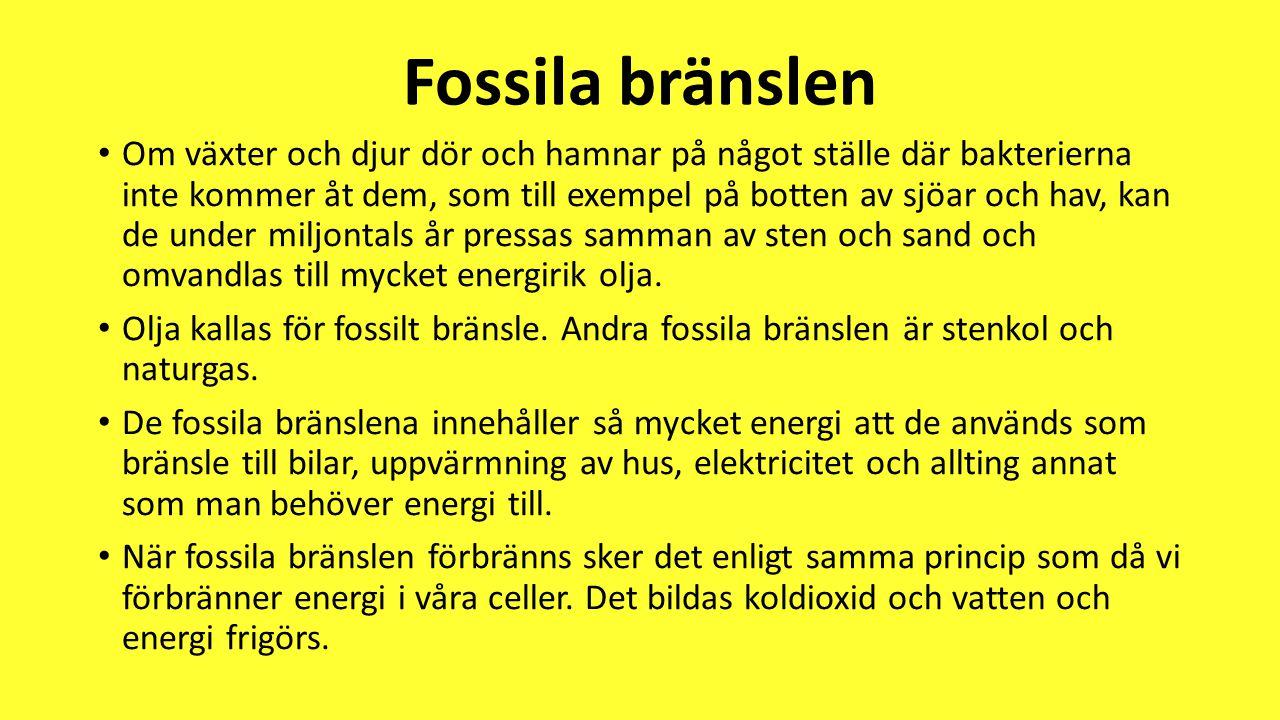 Fossila bränslen • Om växter och djur dör och hamnar på något ställe där bakterierna inte kommer åt dem, som till exempel på botten av sjöar och hav,