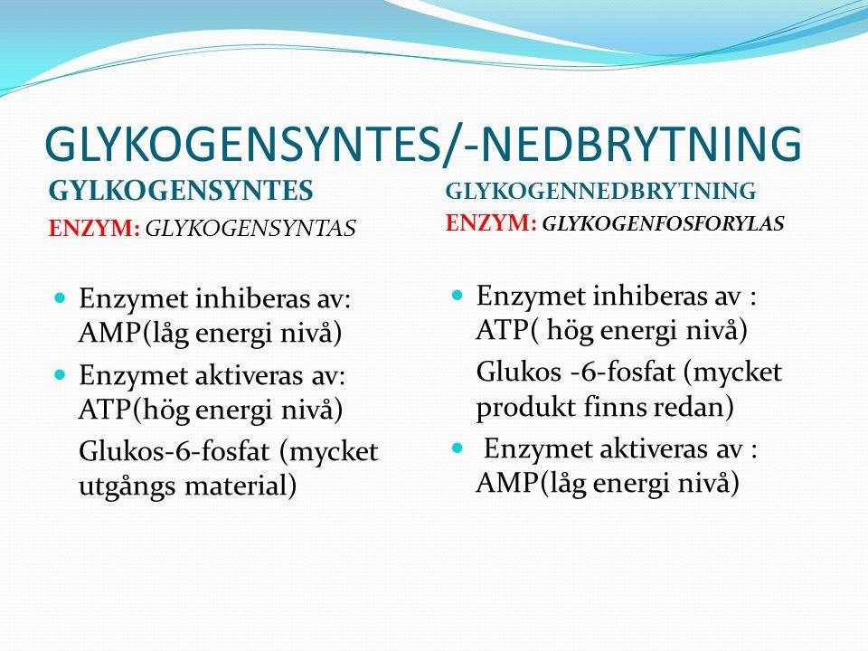 GLYKOGENSYNTES/-NEDBRYTNING GYLKOGENSYNTES ENZYM: GLYKOGENSYNTAS GLYKOGENNEDBRYTNING ENZYM: GLYKOGENFOSFORYLAS  Enzymet inhiberas av: AMP(låg energi