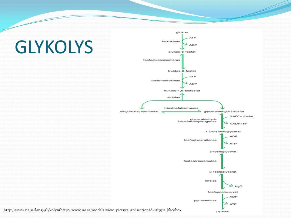 GLYKOLYS http://www.ne.se/lang/glykolys#http://www.ne.se/modals/view_picture.jsp?sectionId=183521||facebox