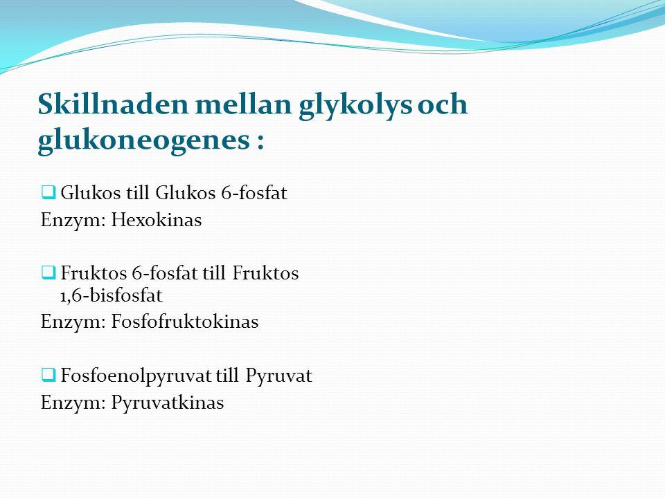 Skillnaden mellan glykolys och glukoneogenes :  Glukos till Glukos 6-fosfat Enzym: Hexokinas  Fruktos 6-fosfat till Fruktos 1,6-bisfosfat Enzym: Fos
