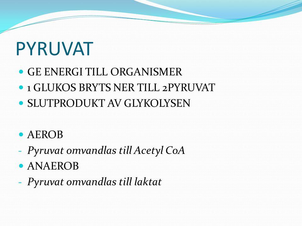 PYRUVAT  GE ENERGI TILL ORGANISMER  1 GLUKOS BRYTS NER TILL 2PYRUVAT  SLUTPRODUKT AV GLYKOLYSEN  AEROB - Pyruvat omvandlas till Acetyl CoA  ANAER
