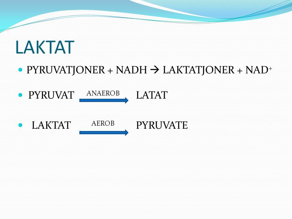LAKTAT  PYRUVATJONER + NADH  LAKTATJONER + NAD +  PYRUVAT ANAEROB LATAT  LAKTAT AEROB PYRUVATE