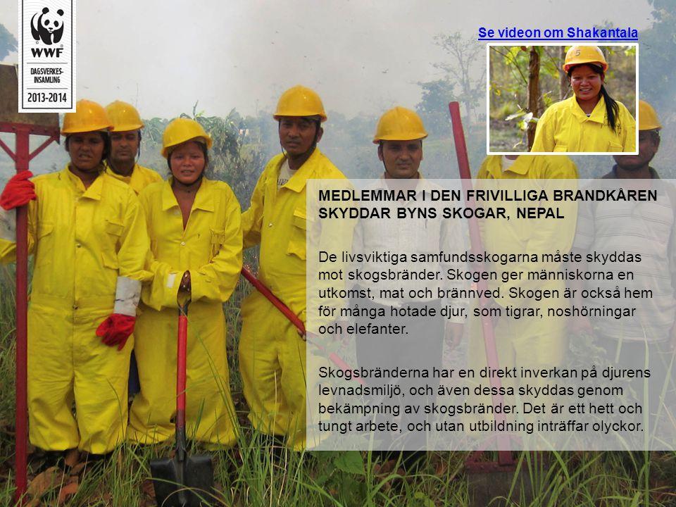 Se videon om Shakantala MEDLEMMAR I DEN FRIVILLIGA BRANDKÅREN SKYDDAR BYNS SKOGAR, NEPAL De livsviktiga samfundsskogarna måste skyddas mot skogsbrände