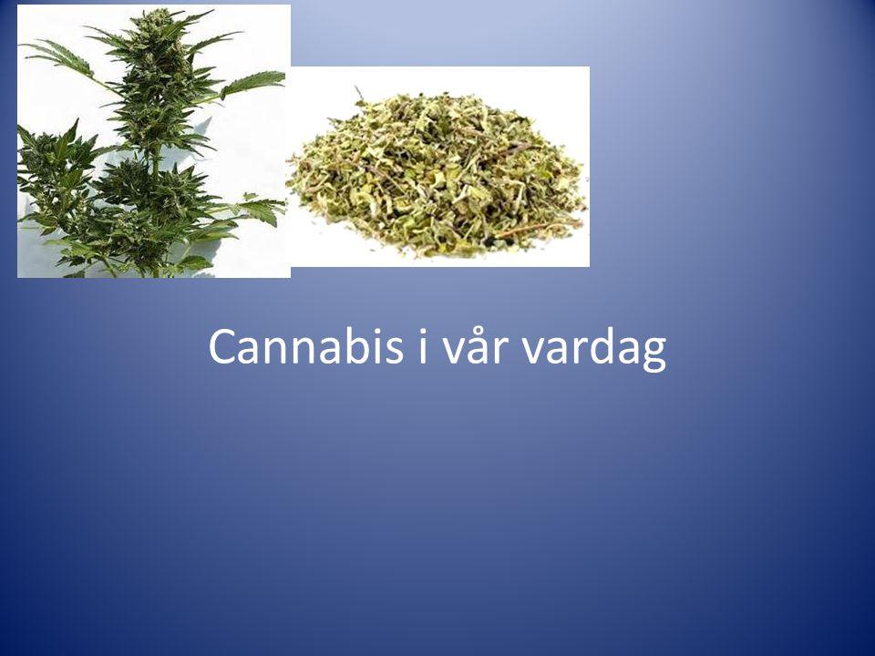 Cannabis i vår vardag