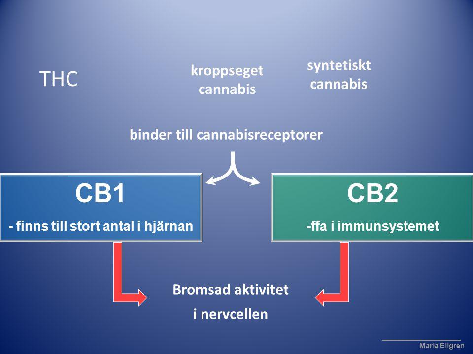 CB1 - finns till stort antal i hjärnan CB2 -ffa i immunsystemet THC binder till cannabisreceptorer ____________________ Maria Ellgren kroppseget canna