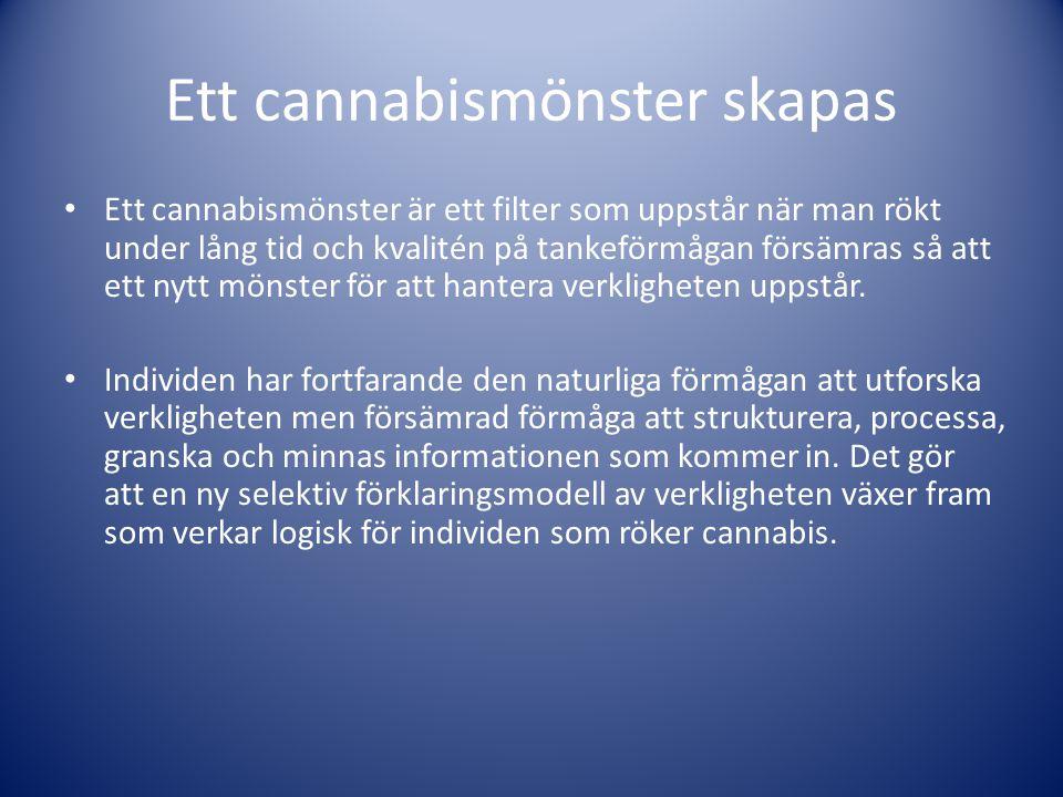 Ett cannabismönster skapas • Ett cannabismönster är ett filter som uppstår när man rökt under lång tid och kvalitén på tankeförmågan försämras så att