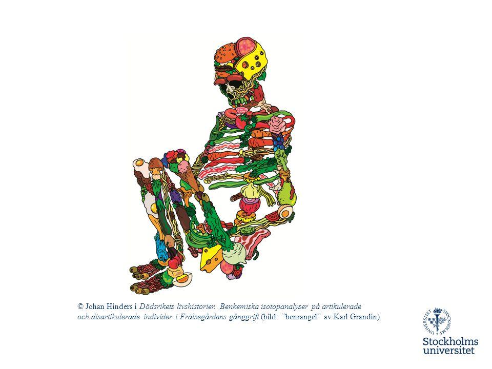 """© Johan Hinders i Dödsrikets livshistorier. Benkemiska isotopanalyser på artikulerade och disartikulerade individer i Frälsegårdens gånggrift.(bild: """""""