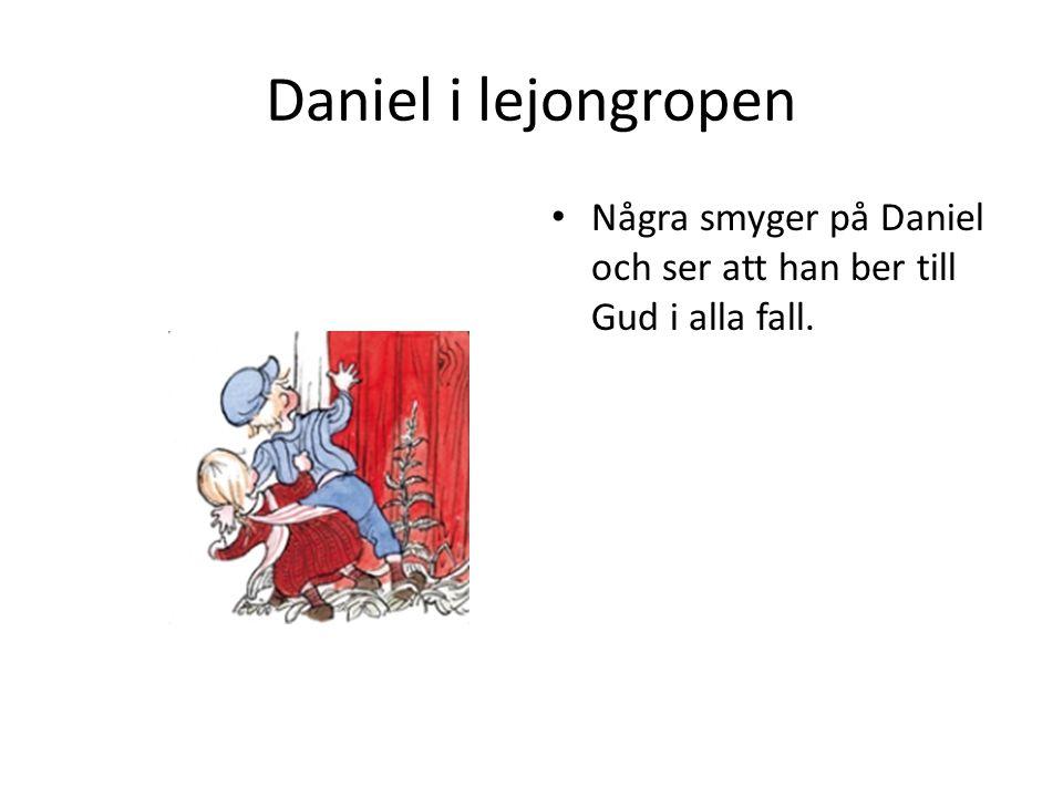 Daniel i lejongropen • Några smyger på Daniel och ser att han ber till Gud i alla fall.