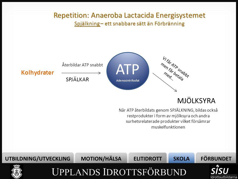 Repetition: Anaeroba Lactacida Energisystemet Spjälkning – ett snabbare sätt än Förbränning ATP Adenosintrifosfat Kolhydrater Återbildar ATP snabbt Nä
