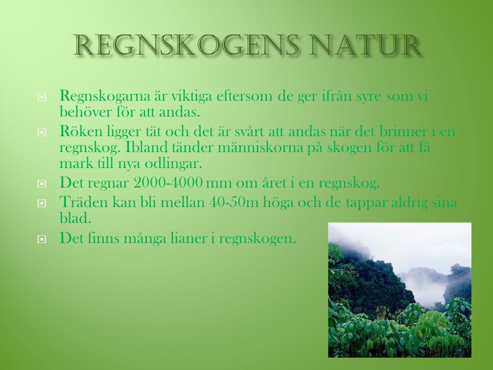  Regnskogarna är viktiga eftersom de ger ifrån syre som vi behöver för att andas.  Röken ligger tät och det är svårt att andas när det brinner i en