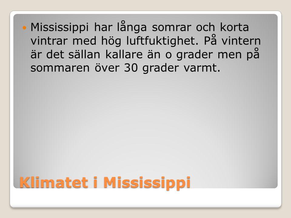 Klimatet i Mississippi  Mississippi har långa somrar och korta vintrar med hög luftfuktighet.