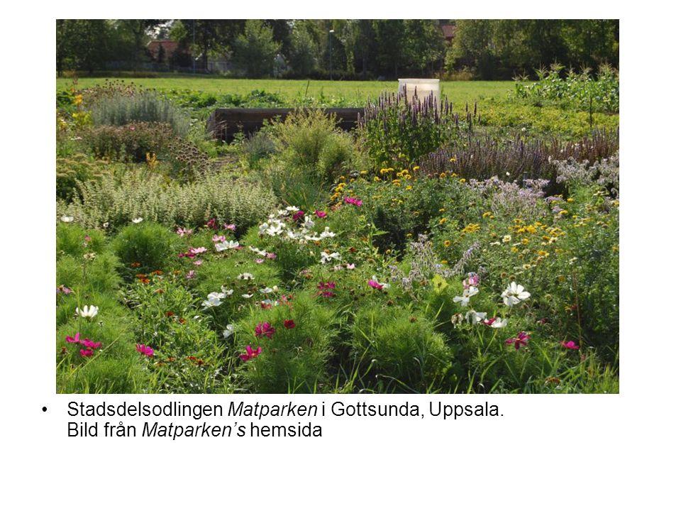 •Stadsdelsodlingen Matparken i Gottsunda, Uppsala. Bild från Matparken's hemsida