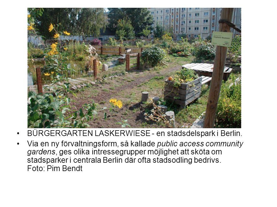•BÜRGERGARTEN LASKERWIESE - en stadsdelspark i Berlin.