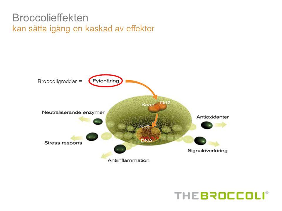 Broccolieffekten kan sätta igång en kaskad av effekter Broccoligroddar =