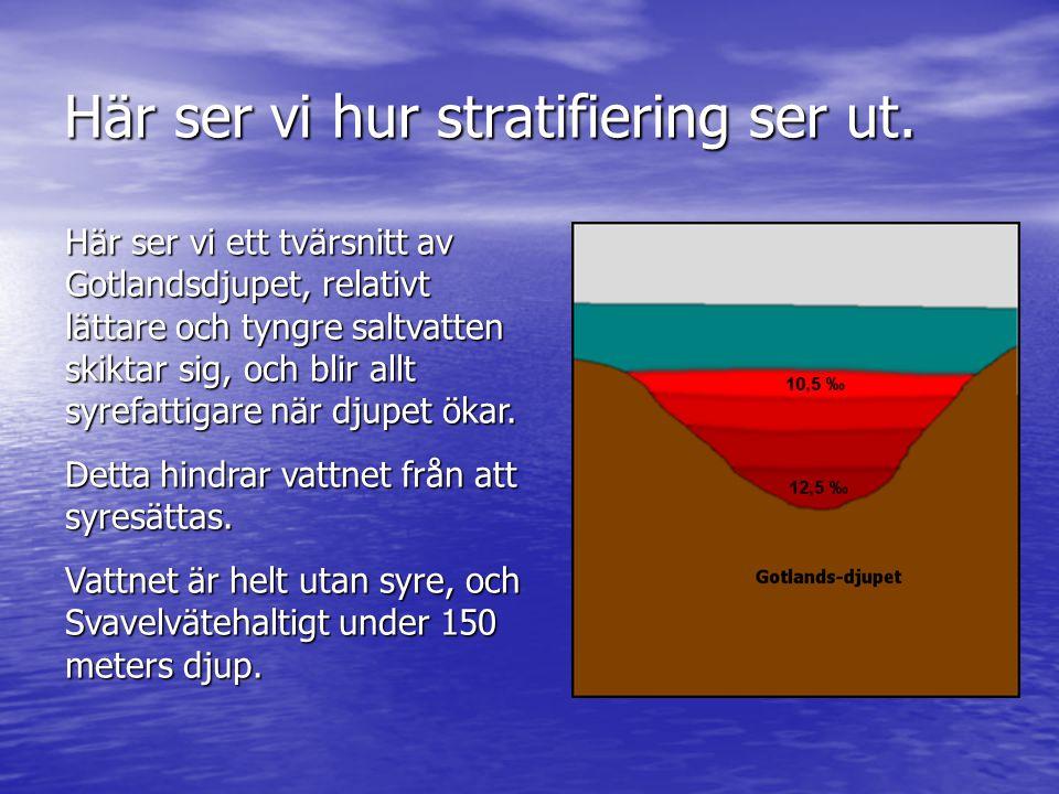 Här ser vi hur stratifiering ser ut. Här ser vi ett tvärsnitt av Gotlandsdjupet, relativt lättare och tyngre saltvatten skiktar sig, och blir allt syr