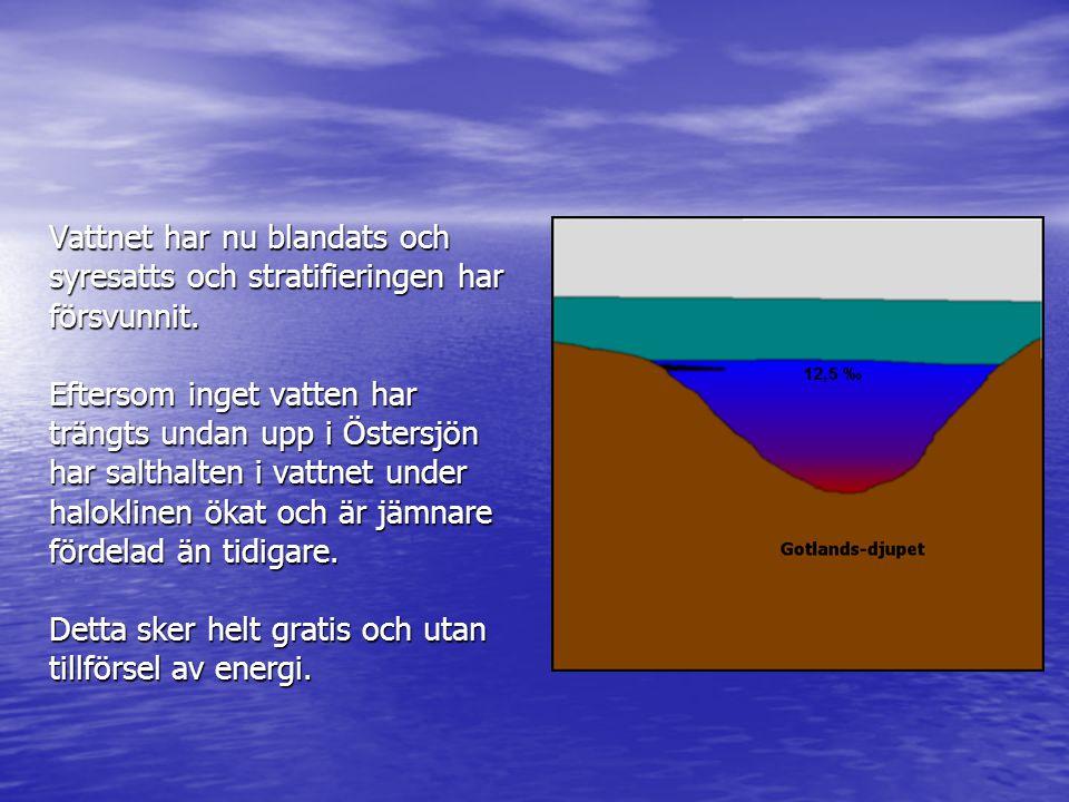 Vattnet har nu blandats och syresatts och stratifieringen har försvunnit. Eftersom inget vatten har trängts undan upp i Östersjön har salthalten i vat
