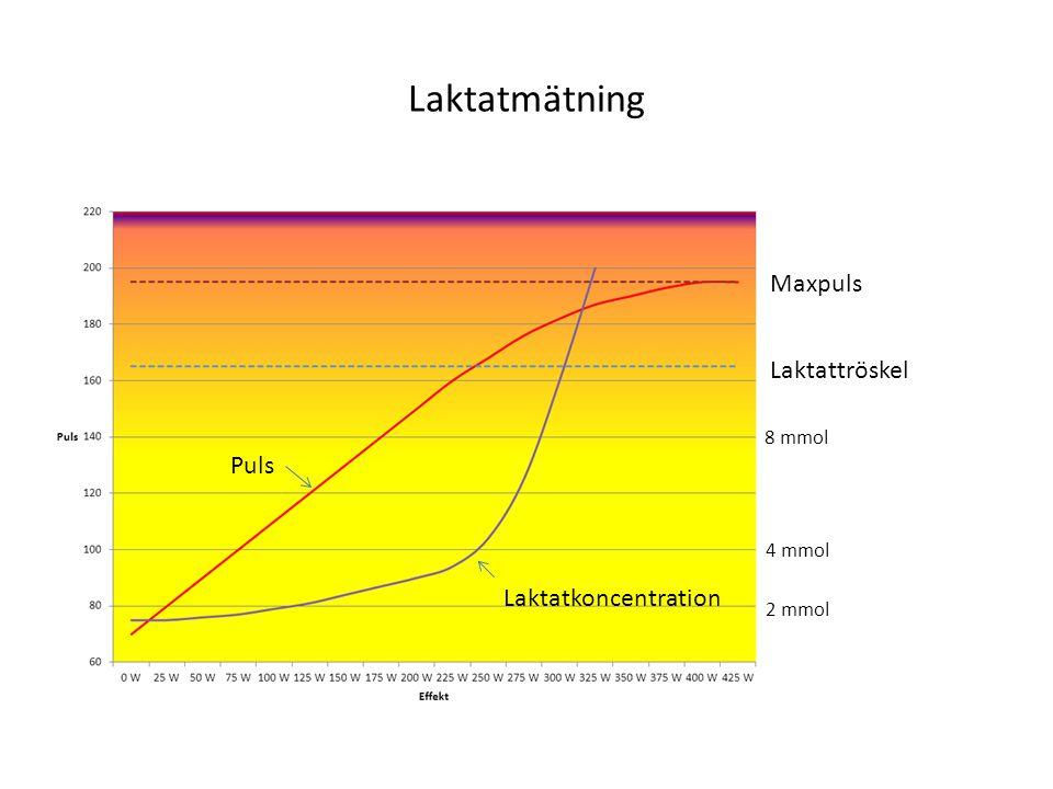 Laktatmätning Maxpuls Laktattröskel Laktatkoncentration Puls 2 mmol 4 mmol 8 mmol