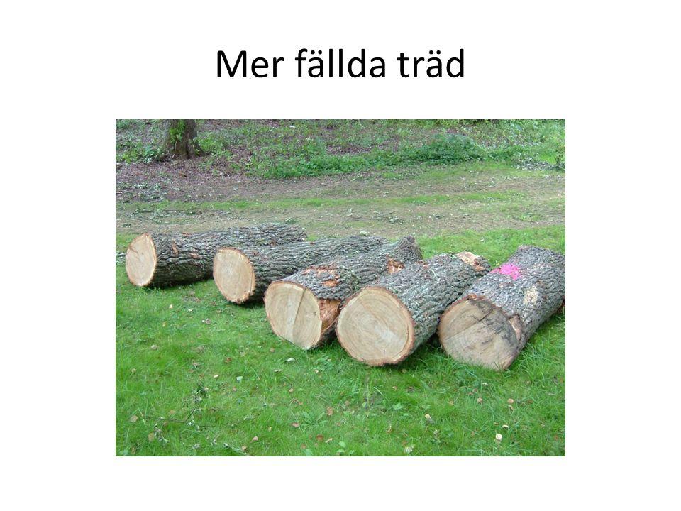 Mer fällda träd