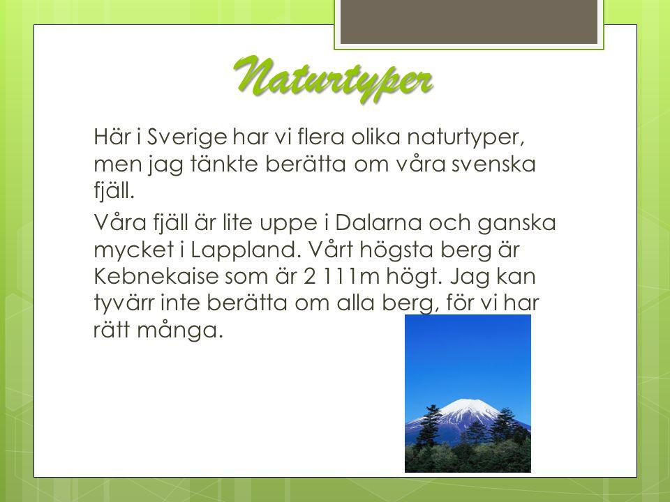 Naturtyper Här i Sverige har vi flera olika naturtyper, men jag tänkte berätta om våra svenska fjäll. Våra fjäll är lite uppe i Dalarna och ganska myc