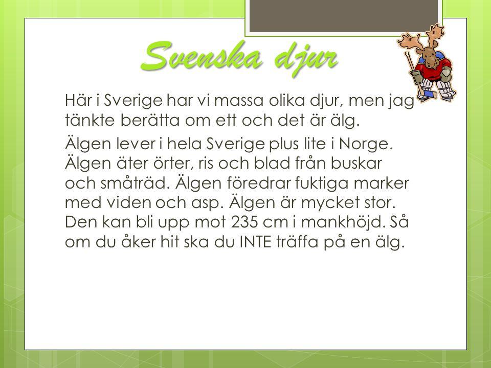 Svenska djur Här i Sverige har vi massa olika djur, men jag tänkte berätta om ett och det är älg. Älgen lever i hela Sverige plus lite i Norge. Älgen