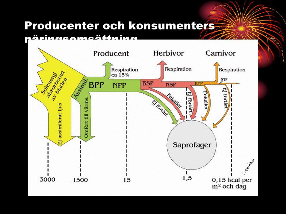 Producenter och konsumenters näringsomsättning