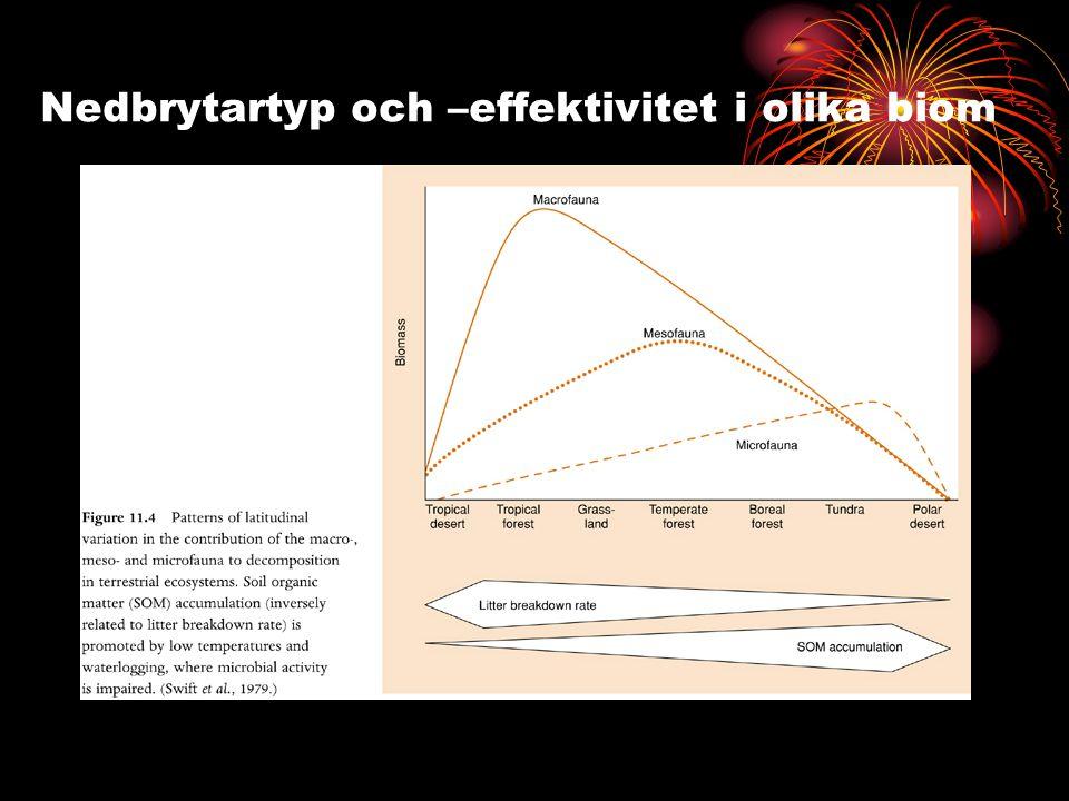 Nedbrytartyp och –effektivitet i olika biom
