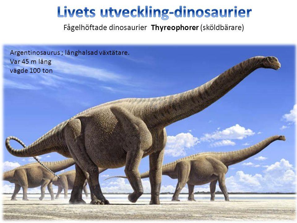 Argentinosaurus ; långhalsad växtätare. Var 45 m lång vägde 100 ton Fågelhöftade dinosaurier Thyreophorer (sköldbärare)