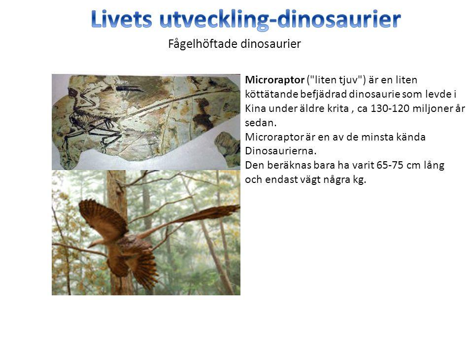 Microraptor (