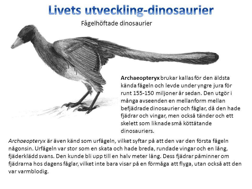 Archaeopteryx brukar kallas för den äldsta kända fågeln och levde under yngre jura för runt 155-150 miljoner år sedan. Den utgör i många avseenden en