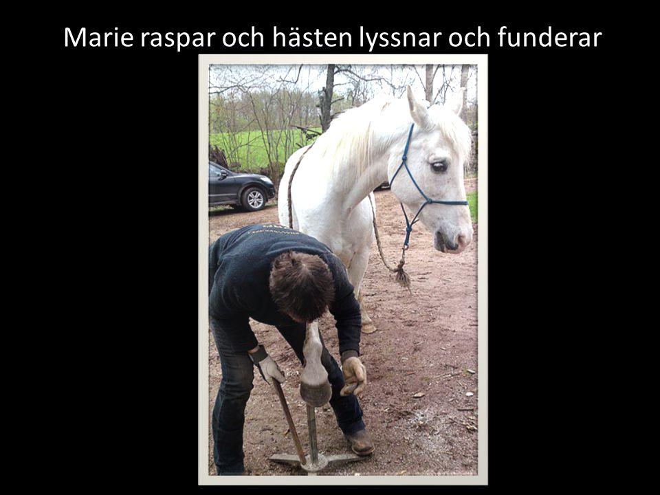 Marie raspar och hästen lyssnar och funderar