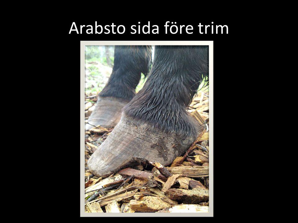 Arabsto sida före trim