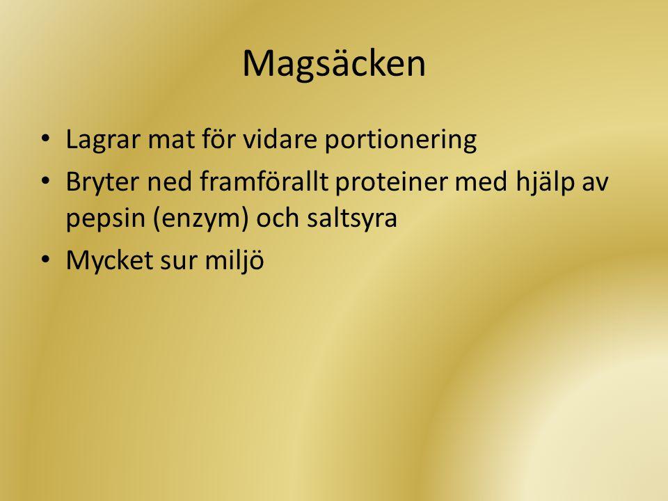 Tolvfingertarmen • Bryter ner med bukspott och galla • Amylas och maltas bryter ner kolhydrater till enklare sockerarter • Trypsin och kymotrypsin bryter ner protein • Lipas bryter ner fettet som finfördelats av gallan • Basisk miljö igen