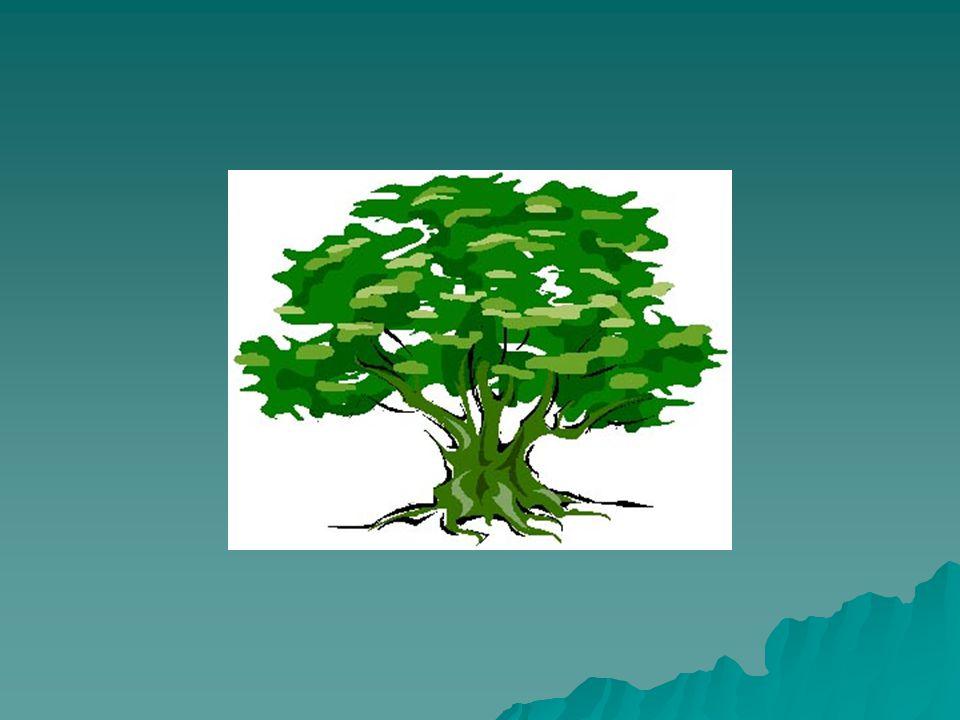 Vad kan EDIT?  Skapa ett scenarioträd  Hypertext  Multimedia  Bild, ljud och rörelse