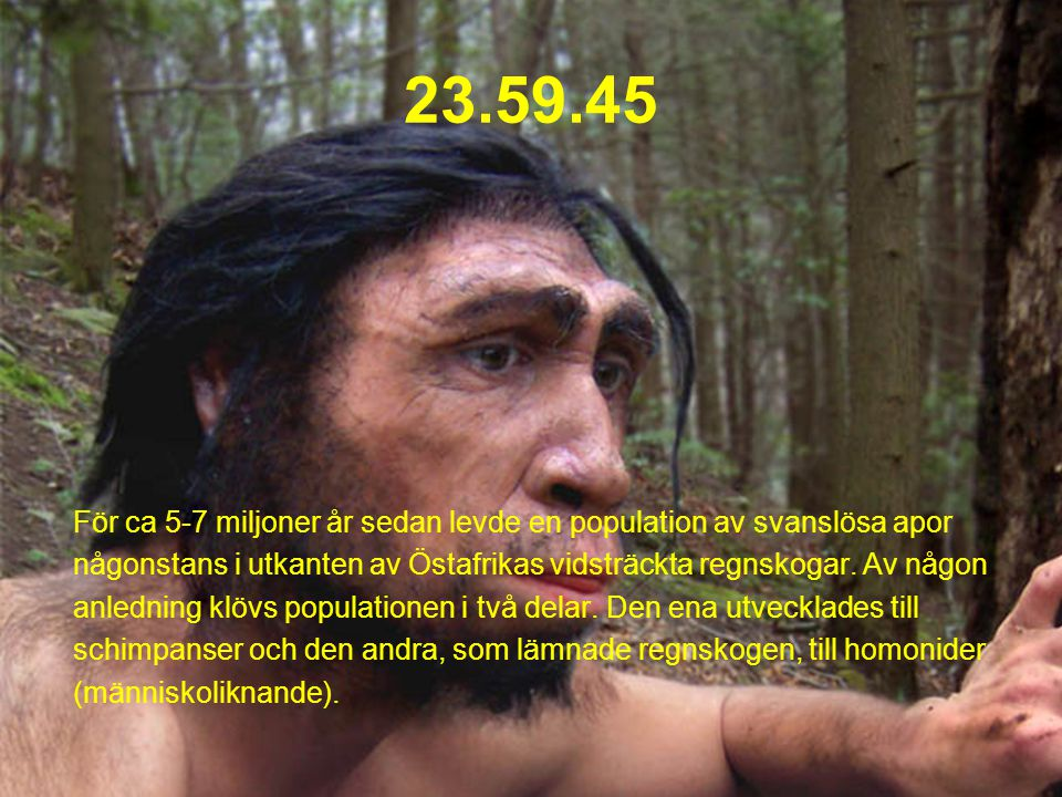 23.59.45 För ca 5-7 miljoner år sedan levde en population av svanslösa apor någonstans i utkanten av Östafrikas vidsträckta regnskogar.