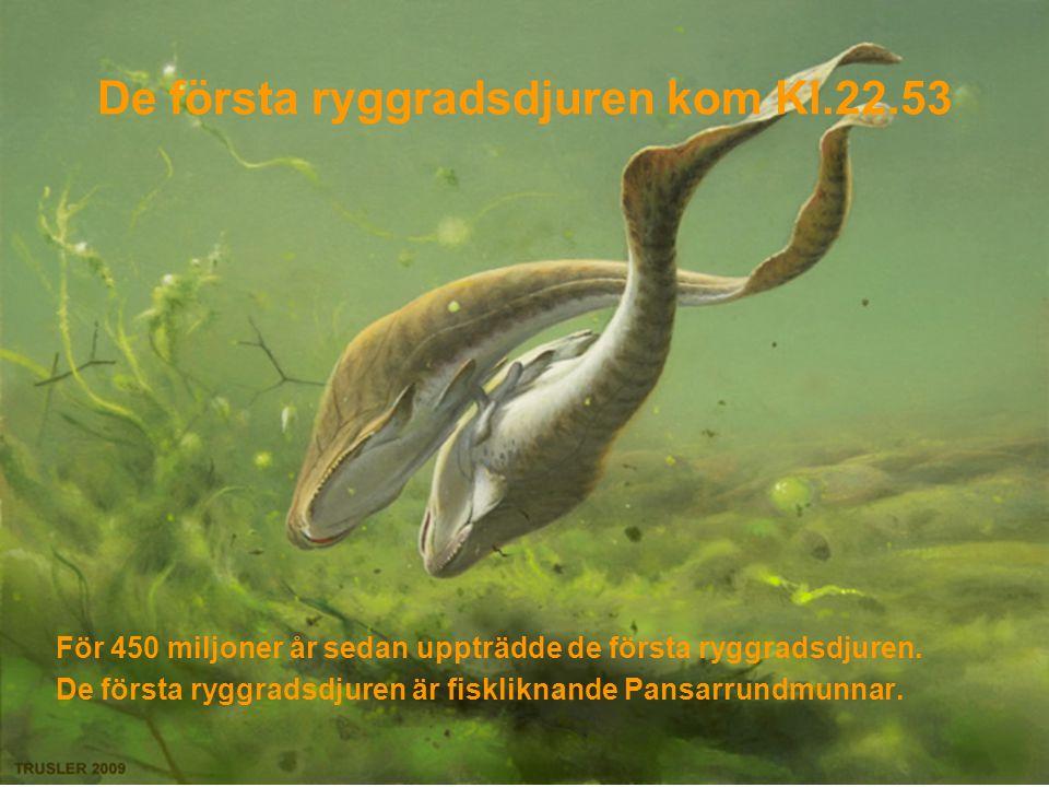 De första landdjuren kom Kl.23.06 Under Silur och devonperioderna har olika sporväxter börjat utvecklas uppe på land, och de första träden (stora ormbunksliknande träd) bildar skogar.