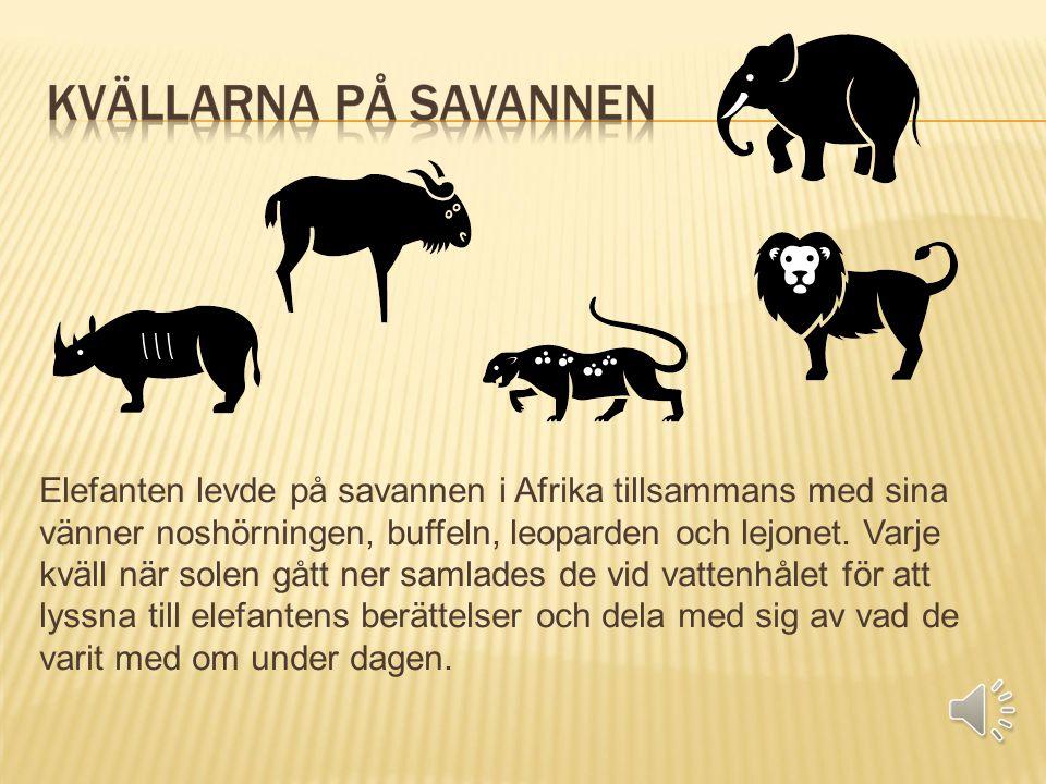 Elefanten levde på savannen i Afrika tillsammans med sina vänner noshörningen, buffeln, leoparden och lejonet. Varje kväll när solen gått ner samlades